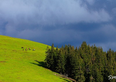 31-muntii-suhard